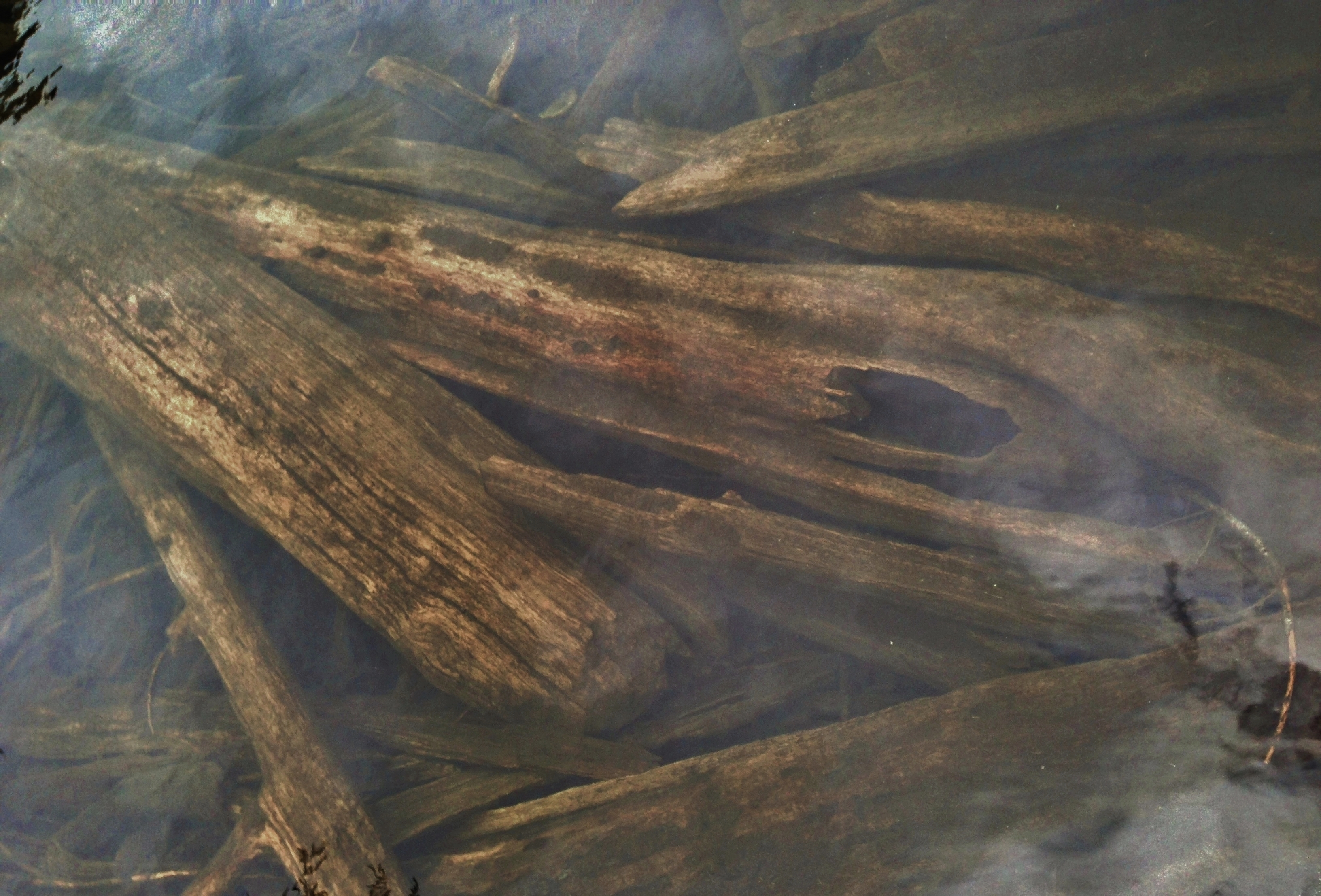 Drowned logs repose beneath the surface at the lake's outlet to Talapus Creek. Talapus Lake, June 09, 2013.