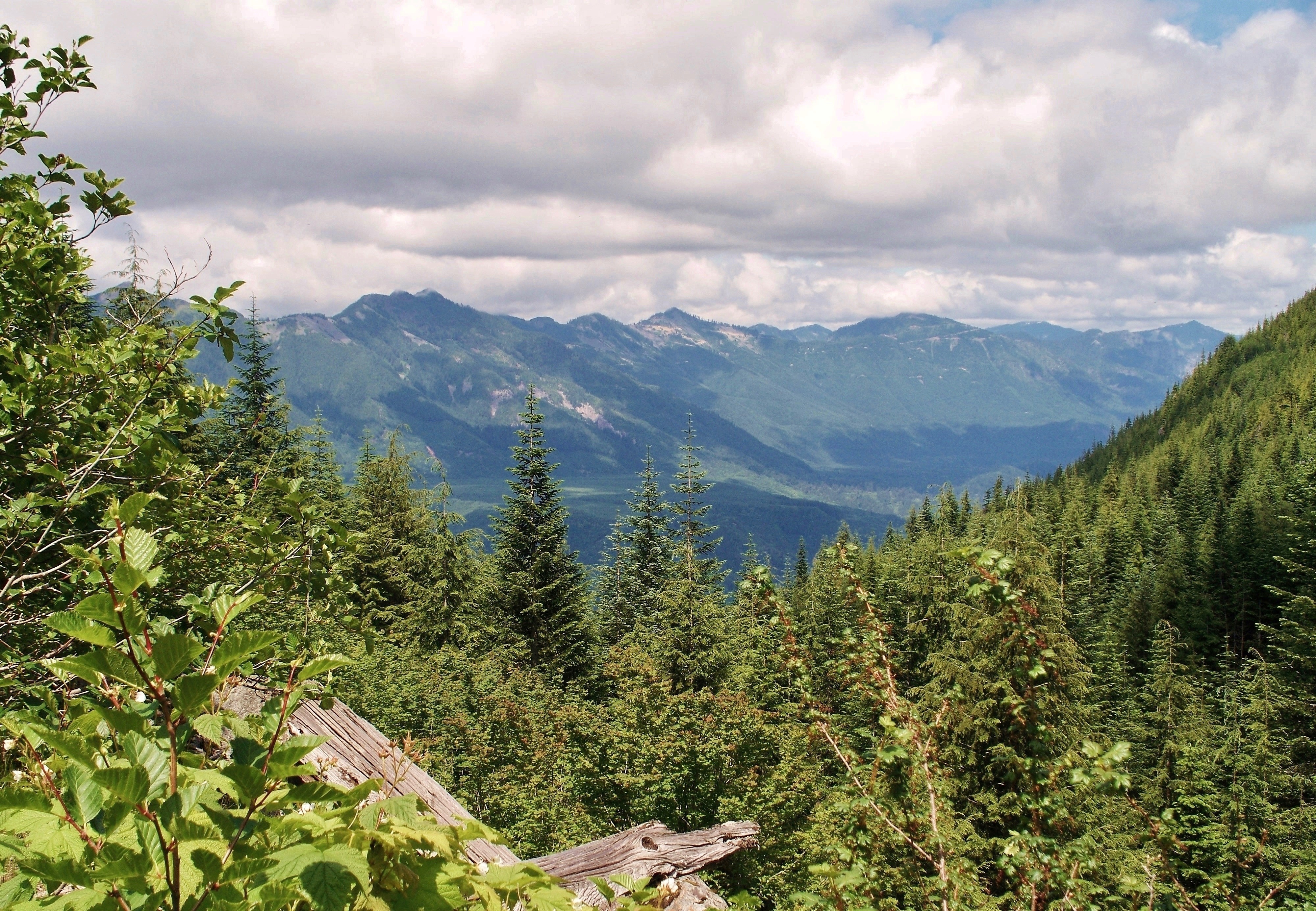 To the northeast, the forest opens to a view up the Middle Fork Snoqualmie River Valley. Mount Washington Trail, July 09, 2009.