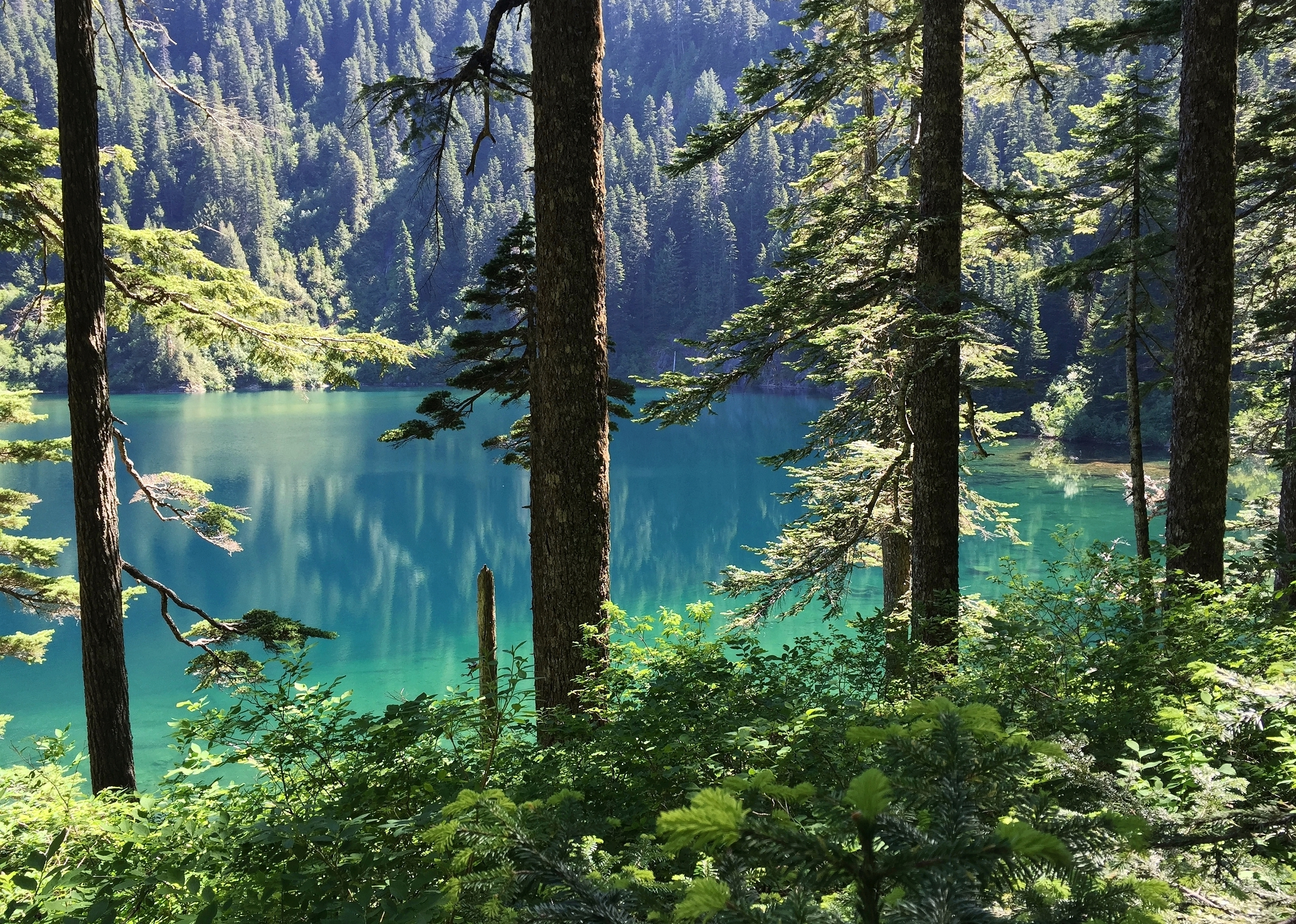 From the slight elevation of the lake's west end, the vivid turquoise hue of its waters is especially apparent. Annette Lake Trail, June 20, 2015.