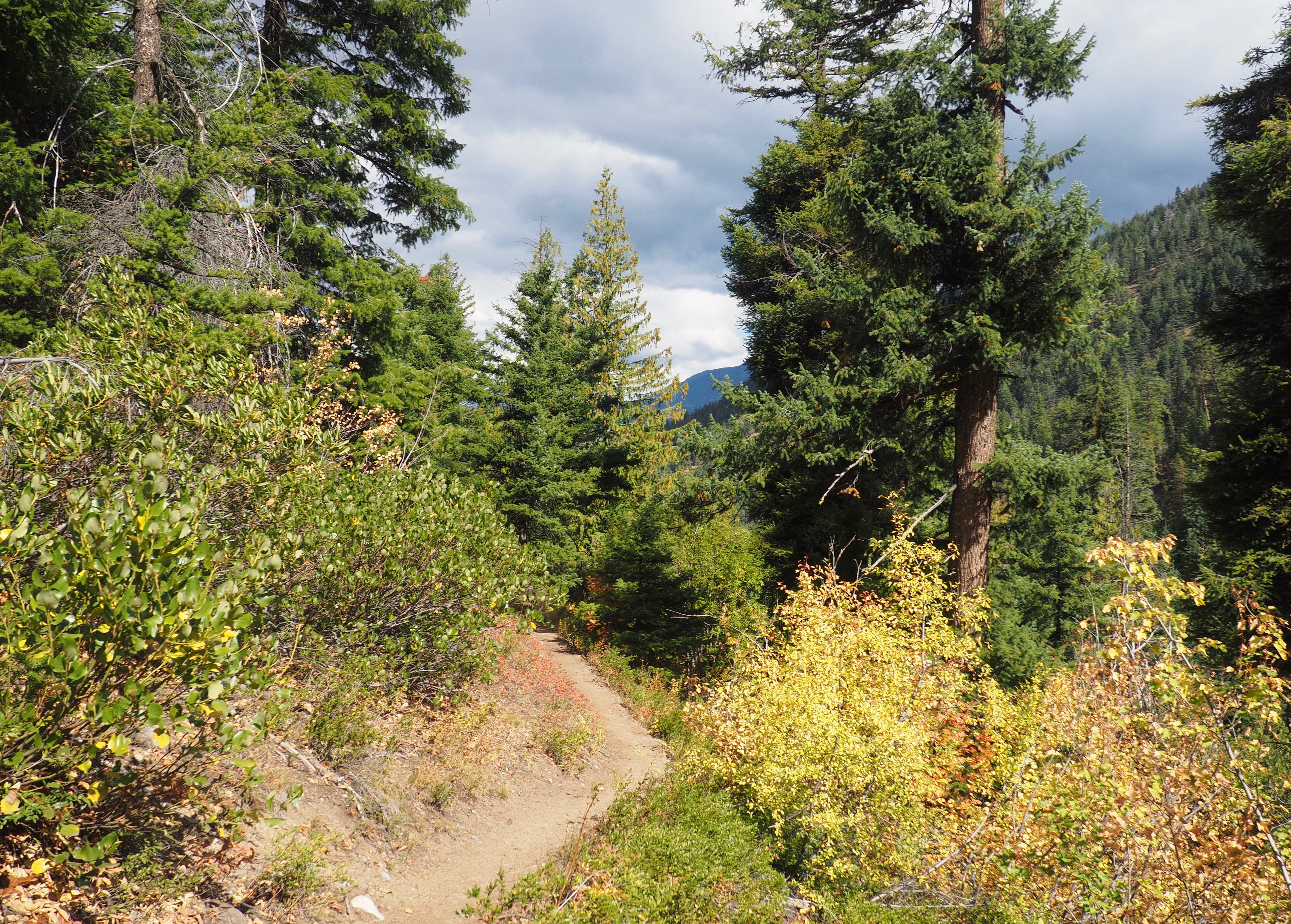 The trail passes through alternating forest and open brush. Cedar Falls Trail, September 21, 2016.