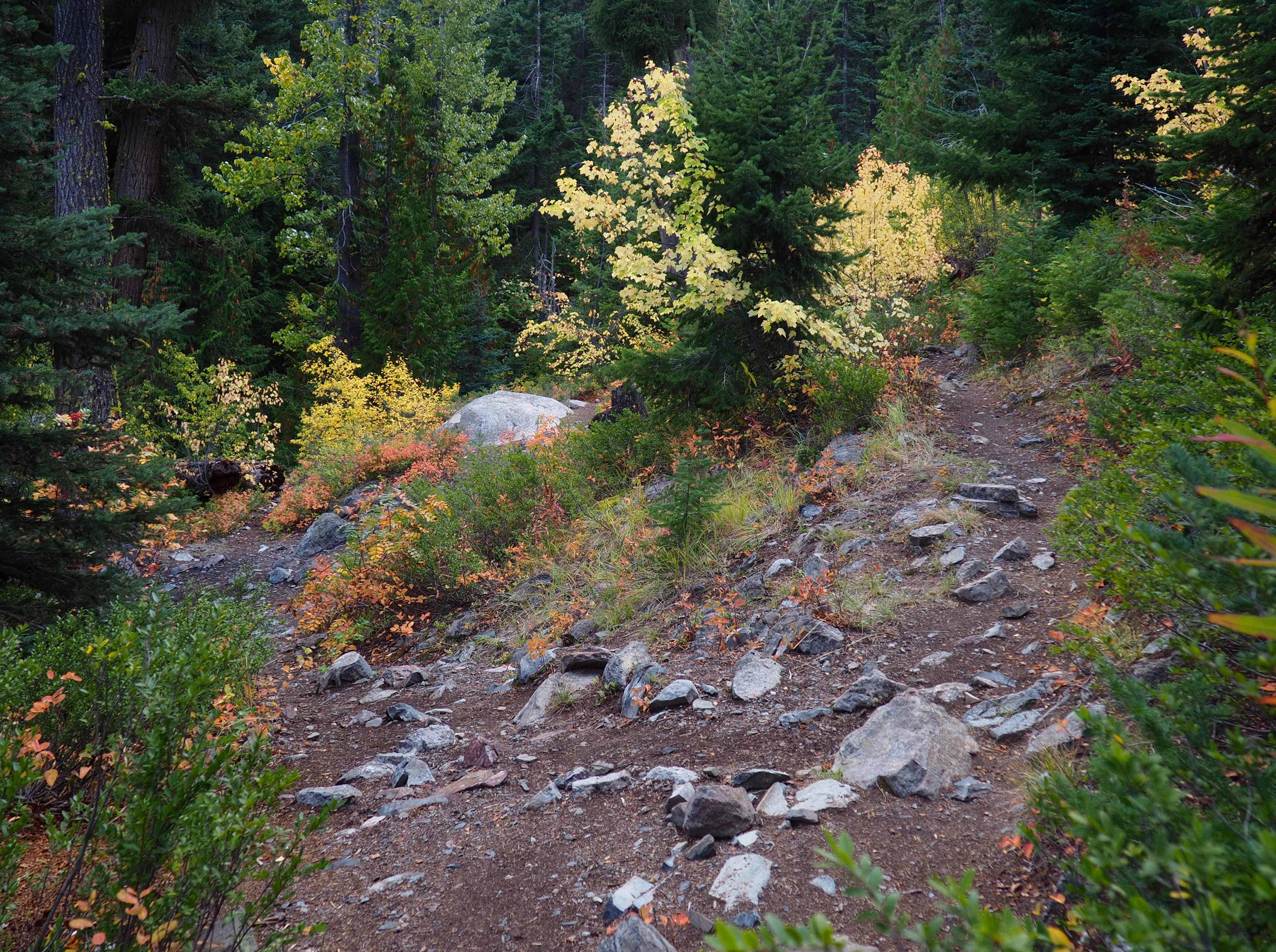 Access to the viewpoints above the falls is barely discernible as an unmarked clearing to the left of the main trail. Cedar Falls Trail, September 21, 2016.