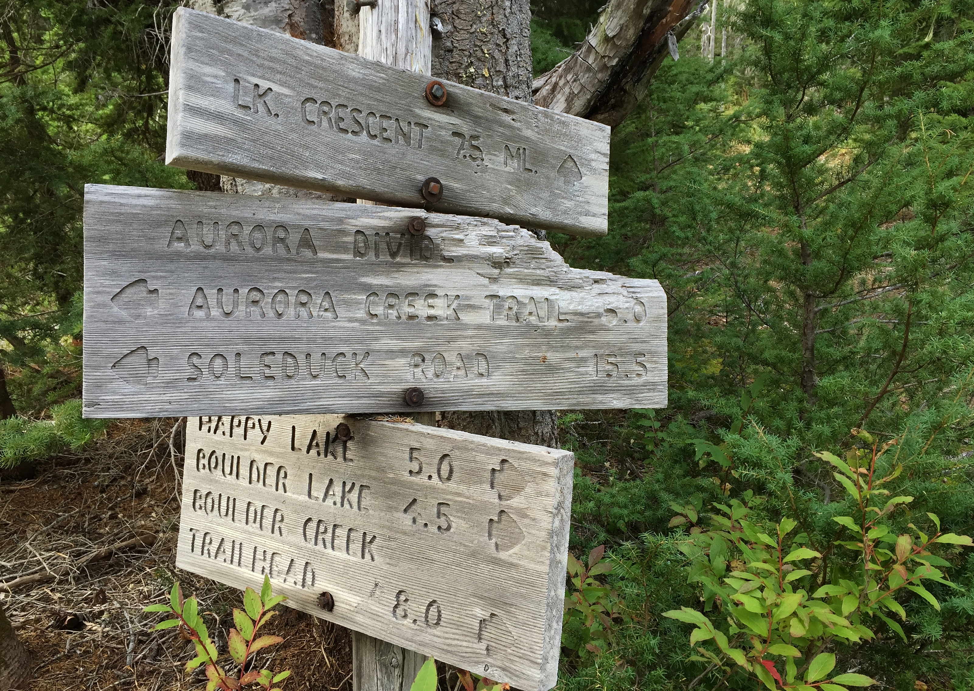 At approximately 7.50 miles/12.00 km from the Marymere Falls trailhead, the Aurora Divide Trail ends at its junction with the Happy Lake Ridge Trail amid scrubby forest typical of local ridgetops. Aurora Divide Trail, September 14, 2015.