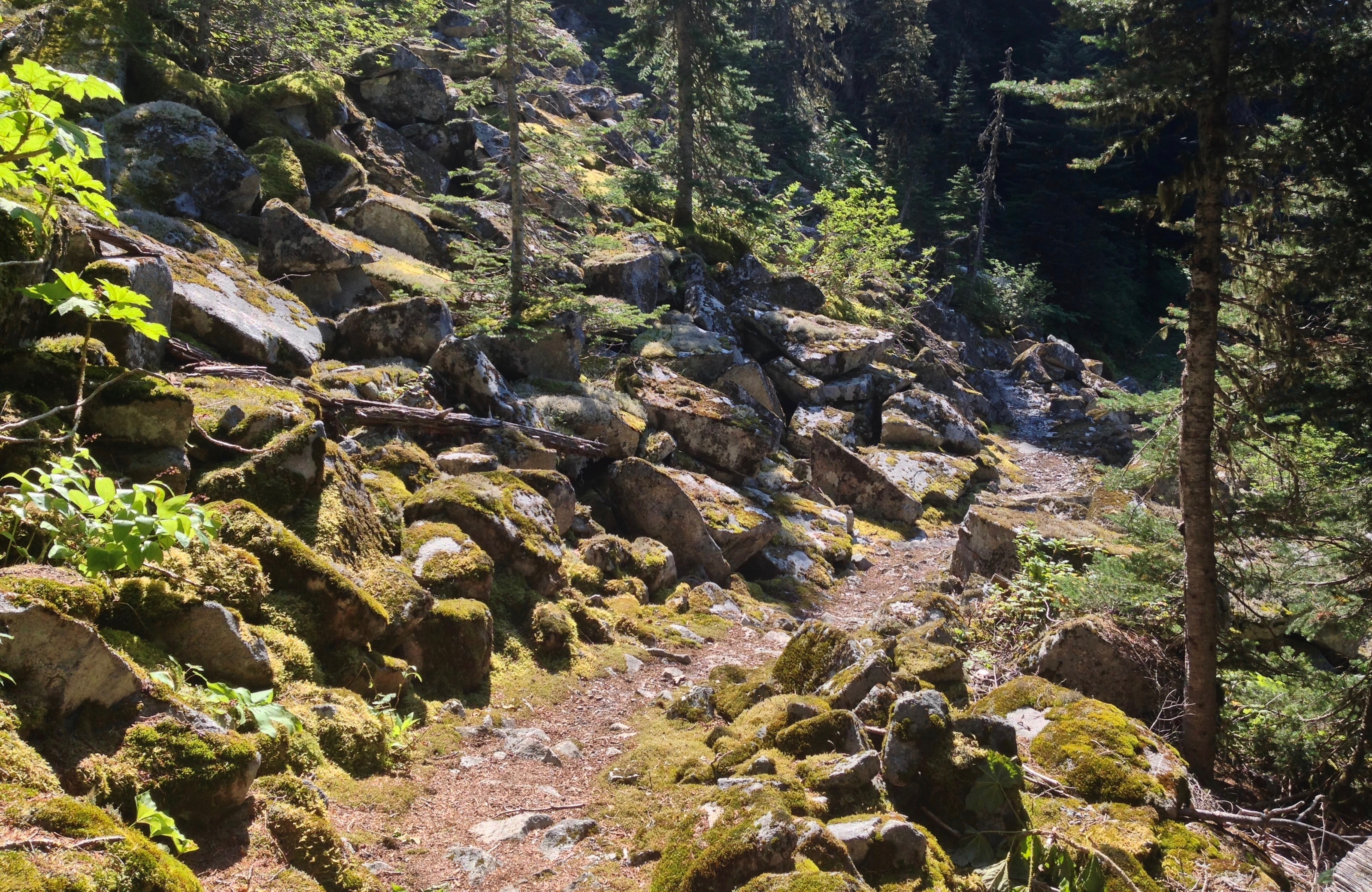 Jumbled heaps of boulders part the forest along the trail's upper reaches, although it is consistently rocky throughout much of its distance. Melakwa - Pratt Lake Traverse, August 03, 2014.