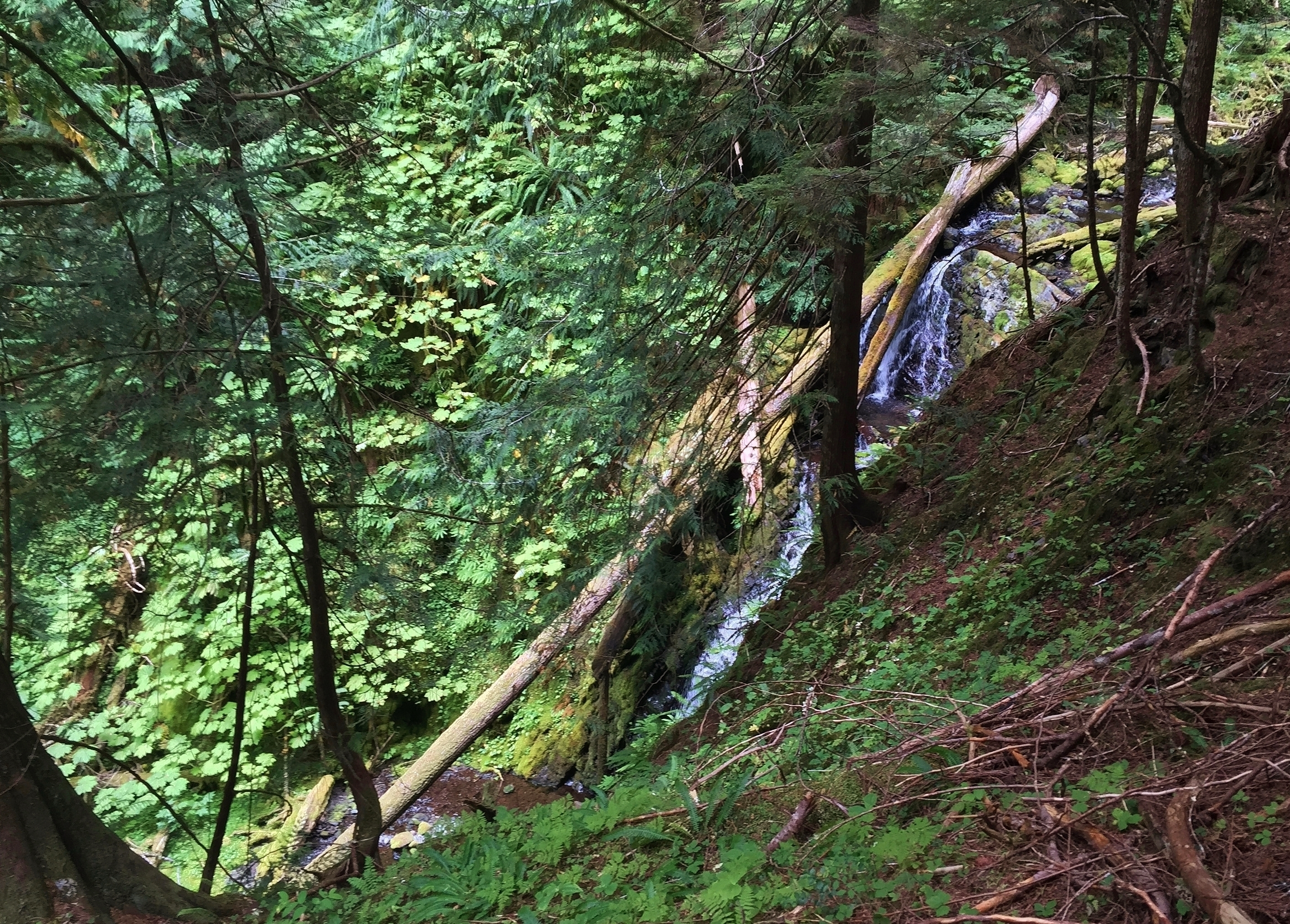 The Aurora Divide Trail climbs steeply at first along an unnamed brook, before flattening in a series of long switchbacks up Happy Lake Ridge. Aurora Divide Trail, September 14, 2015.