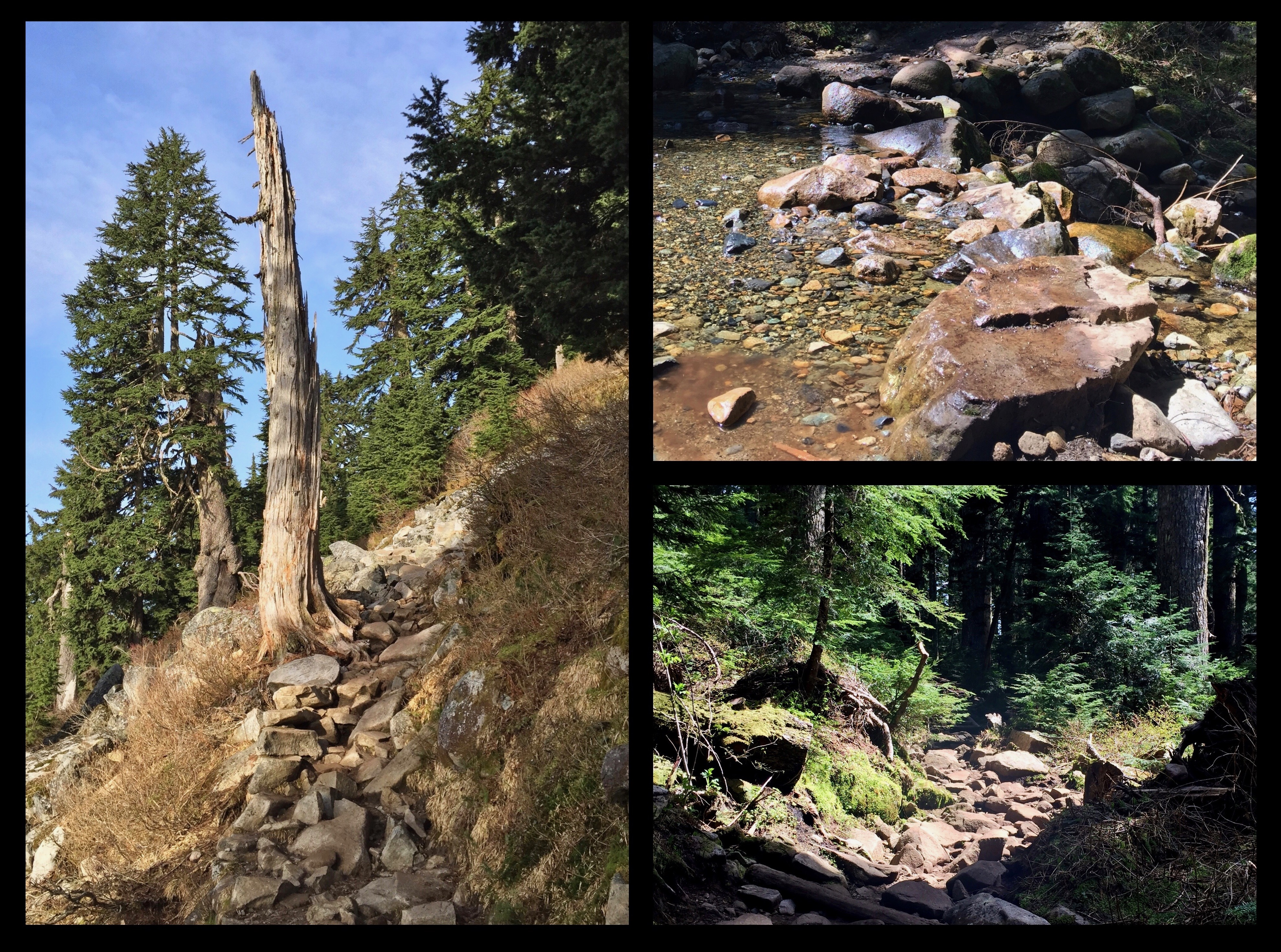 The trail is consistently rocky throughout, including where it crosses Rotary Creek by stepping stones not far from the trailhead. Mount Pilchuck Trail, May 09, 2015.