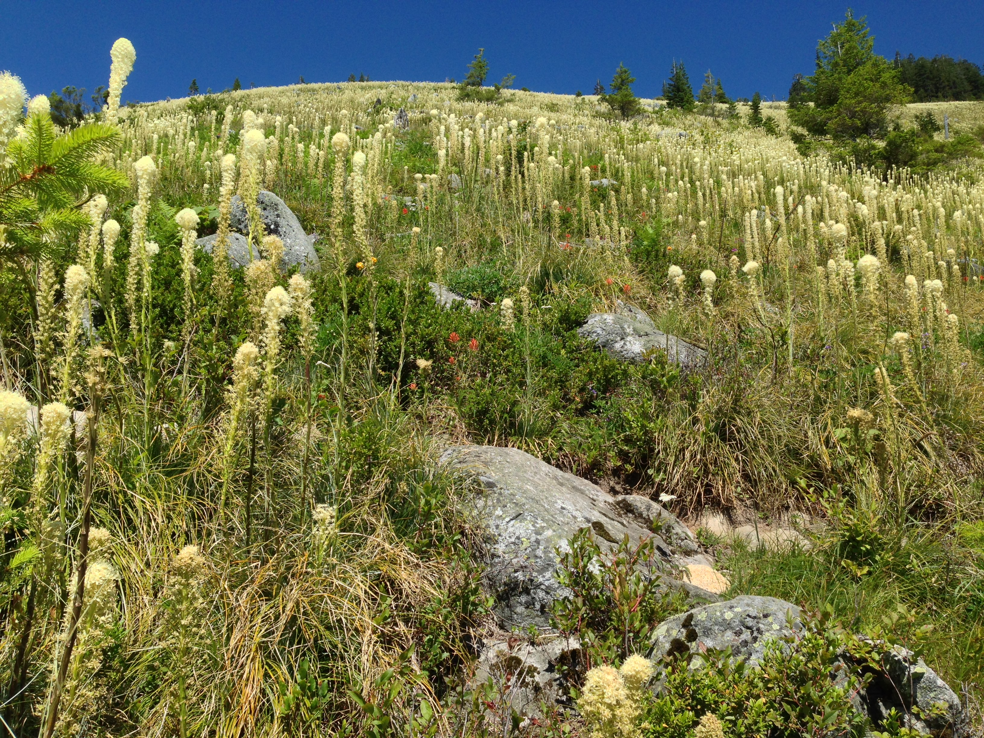 From the Ira Spring Trail, the side trail to Bandera Mountain's summit surges skyward through a vast, boulder-cobbled meadow. Bandera Mountain Trail, July 09, 2014.