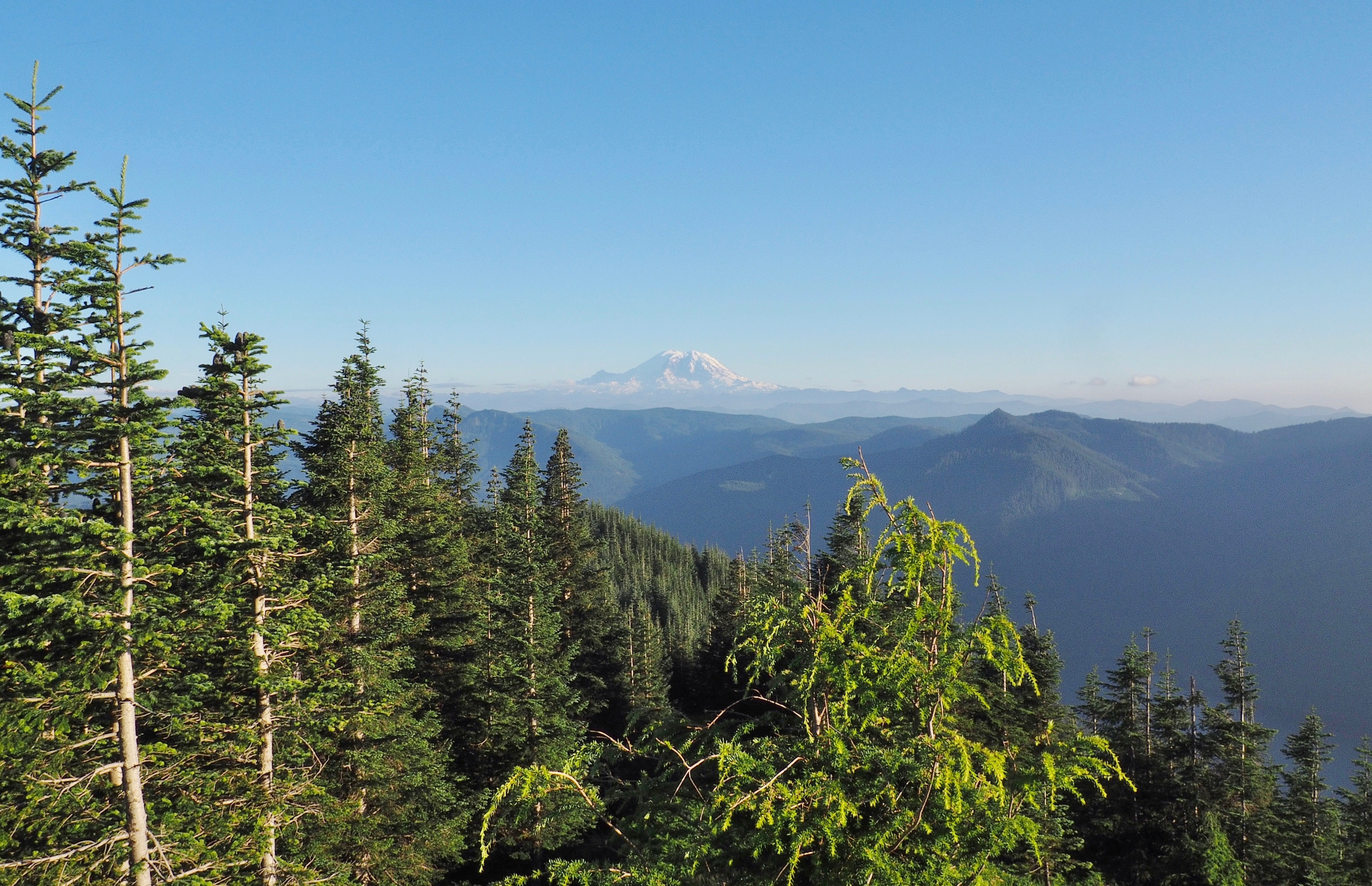 On a cloudless day, Mt. Rainier greets the sight just as the trail clears the forest. Mount Washington Trail, July 26, 2016.