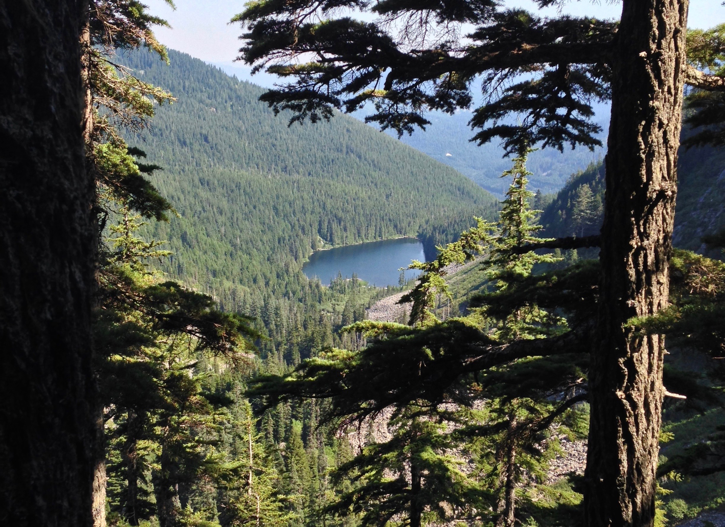 Just before reaching Island Lake, the ridgetop side trail affords a peekaboo view of Talapus Lake lying far down the valley below, where Island Lake's waters next pause before continuing their journey. Ira Spring Trail, August 10, 2014.