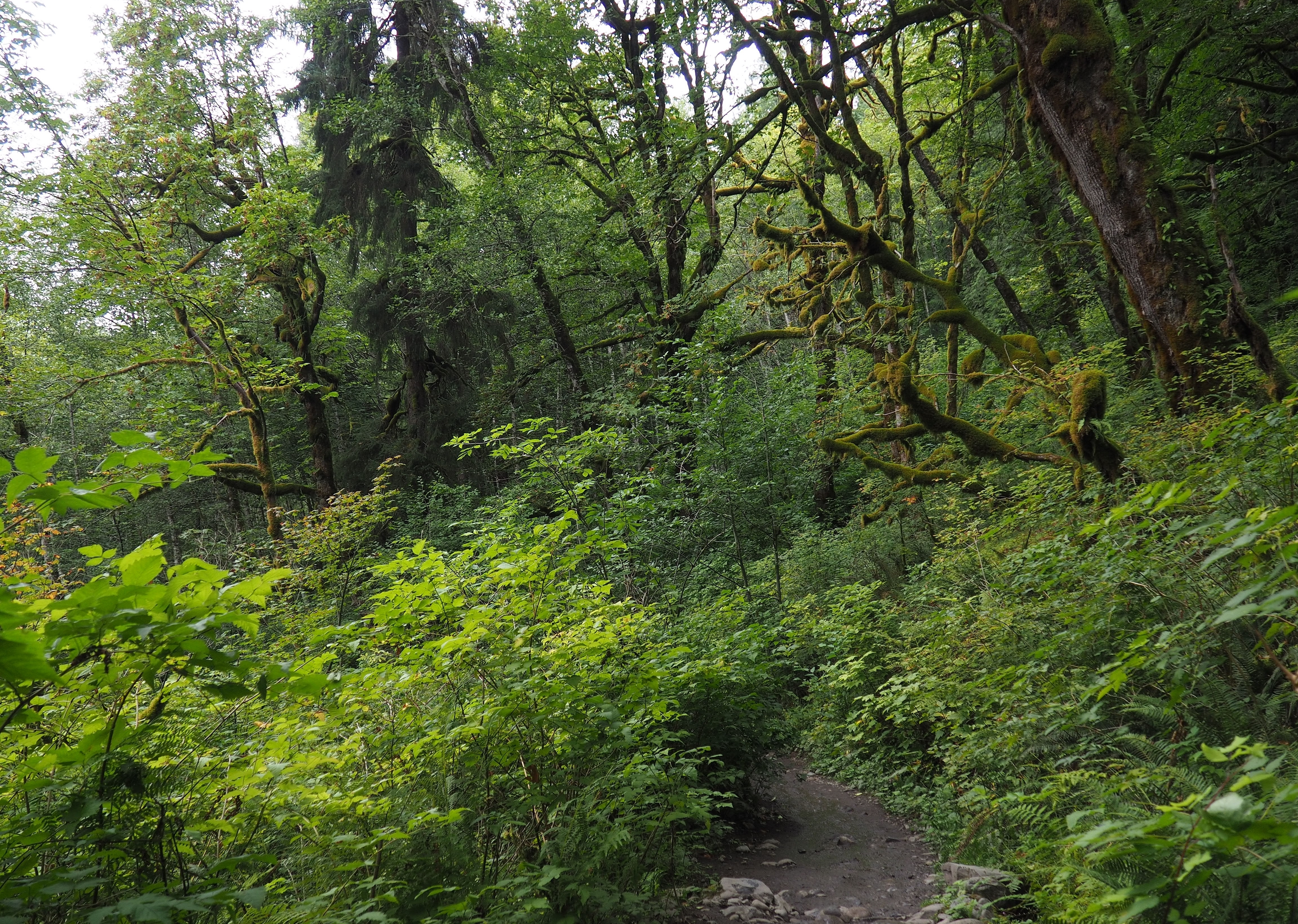 Verdant deciduous woodland drapes much of the western trail's riverside route. Twin Falls Trail (Western Route), August 07, 2016.