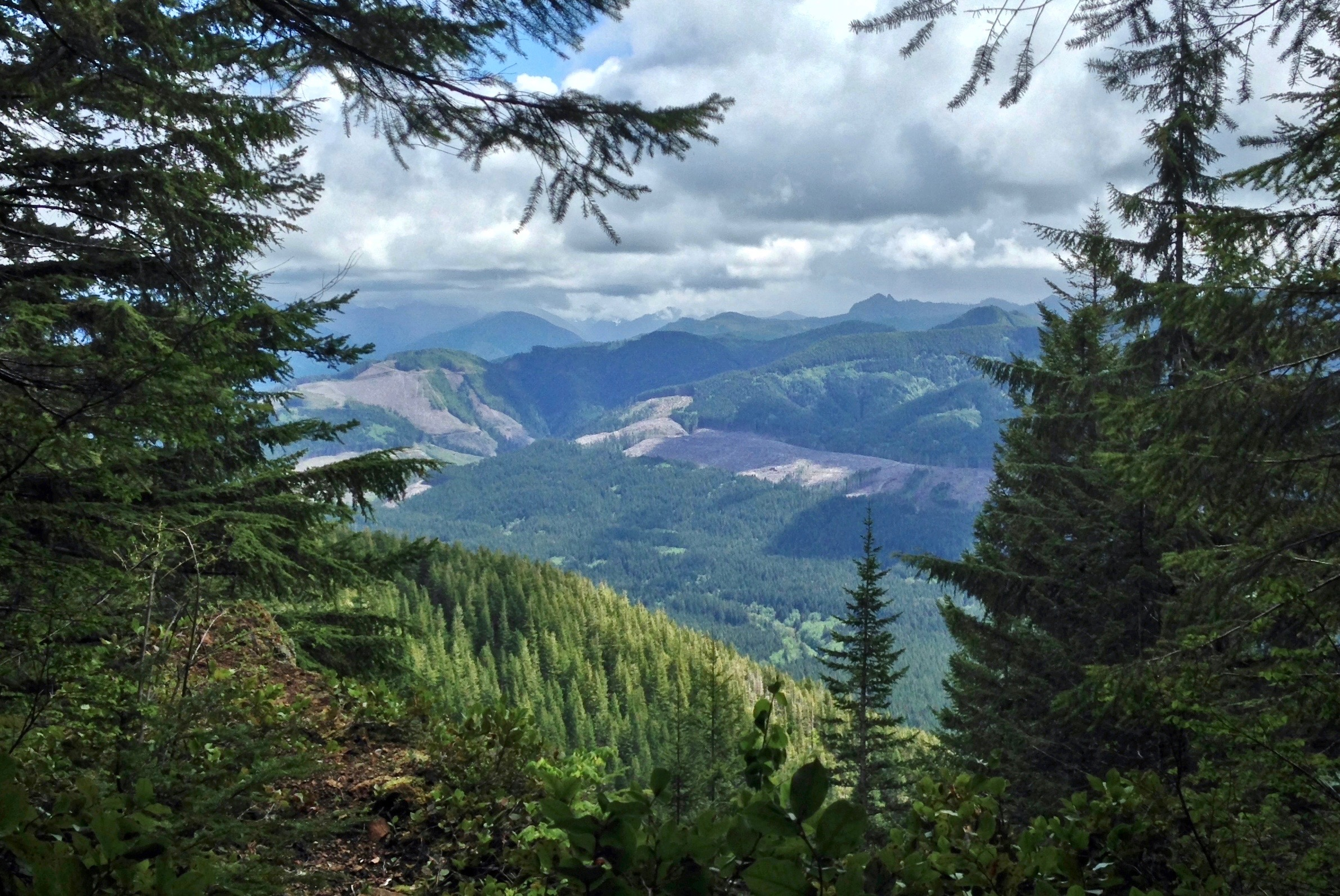 Near the summit, southward views begin to open toward the cloud-shrouded Olympics. Kloshe Nanitch Trail, May 19, 2014.